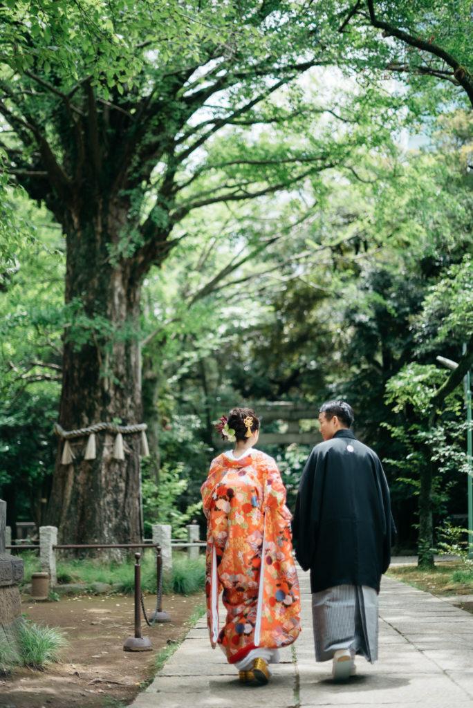 赤坂氷川神社 イチョウの木 銀杏の木
