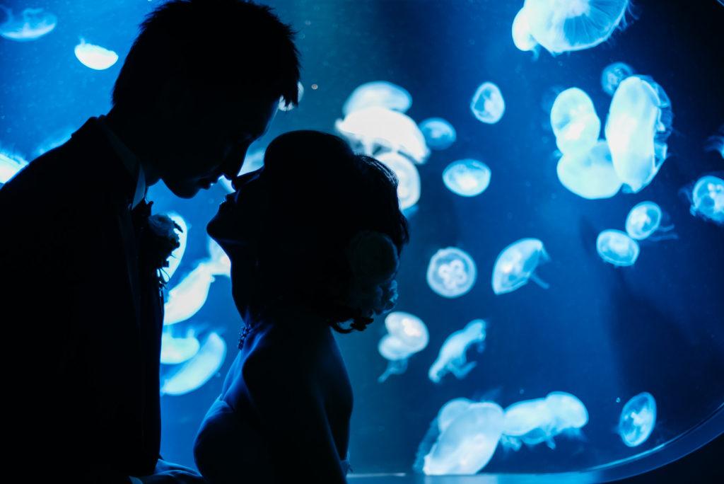福岡 フォトウェディング 水族館
